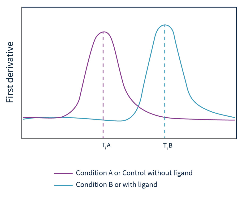 Andromeda uses shifts in the first derivative peaks to find out which conditions stabilize your protein